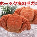 3月下旬より北海道オホーツク海の毛ガニ漁が解禁