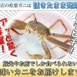 カニ通販レビュー 活×2カニ.com(いきいきかにどっとこむ) 松葉ガニの活蟹や生冷凍ズワイガニを発送するショップ