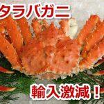 【ニュース】稚内港のタラバガニの輸入激減で最低記録を更新!